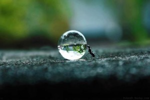 ant pushing droplet of water